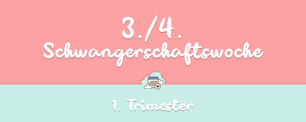 Banner: 3./4. Schwangerschaftswoche