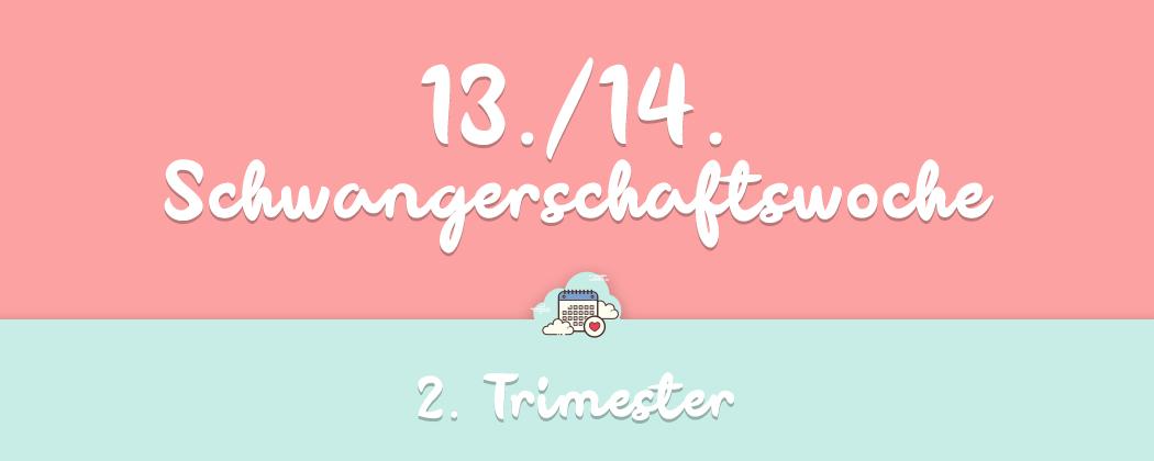 Banner: 13./14. Schwangerschaftswoche