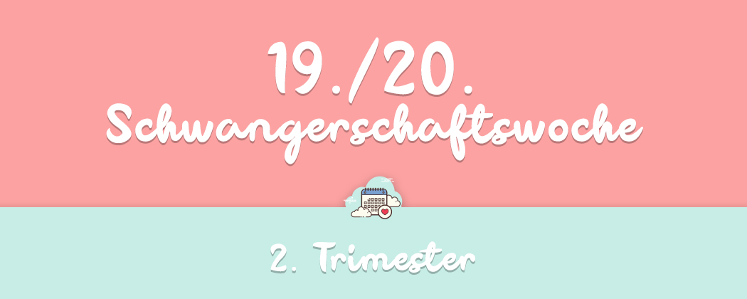 Banner: 19./20. Schwangerschaftswoche