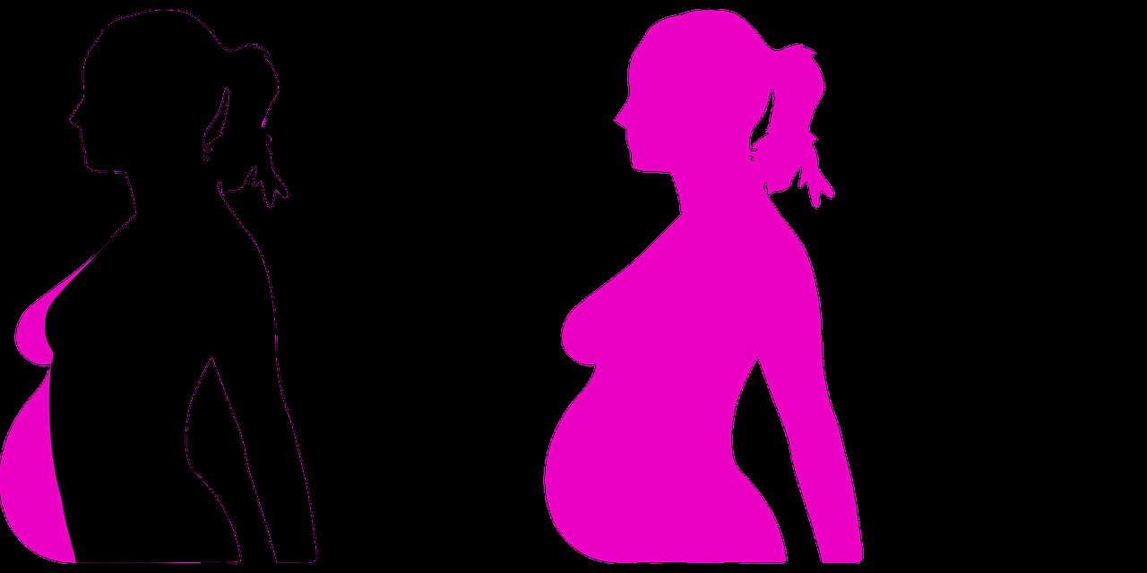 schwangerschaftsentwicklung
