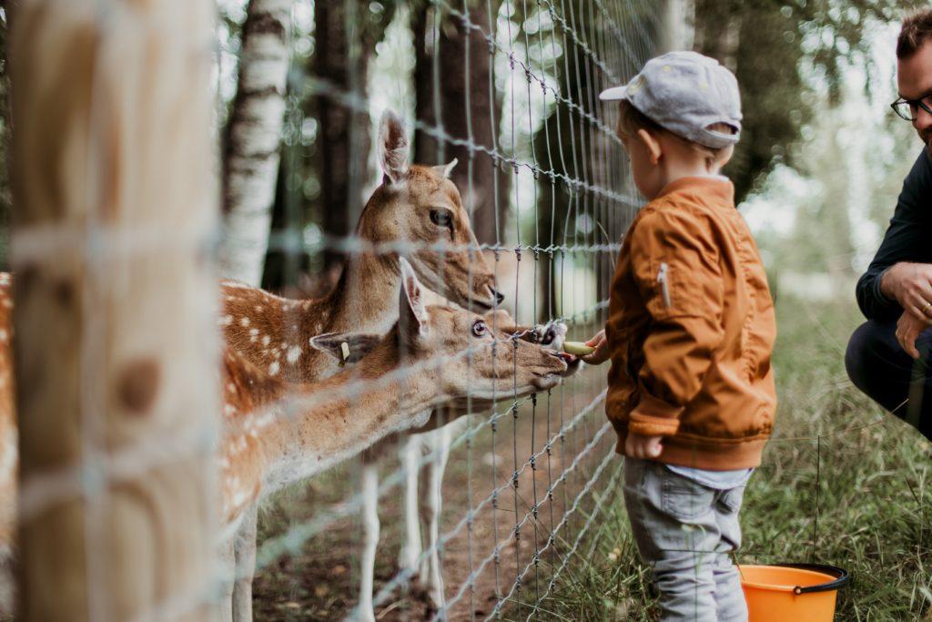 Geschenkideen für Kinder: Ausflüge in den Tierpark