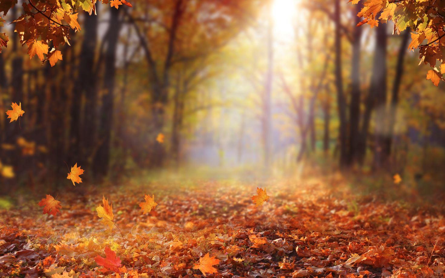 Wald mit Herbstlaub