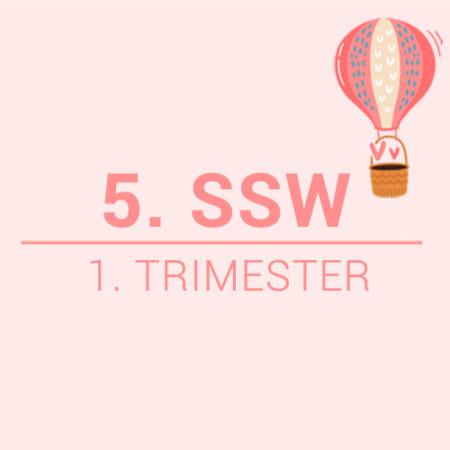 5. SSW Beitragsbild