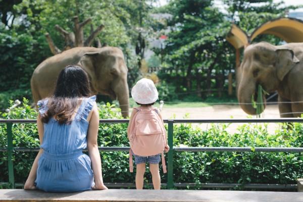 Corona Öffnung der Zoos