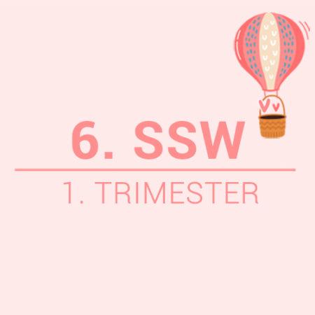 6. SSW