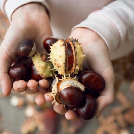 Kinderhand voll mit Kastanien