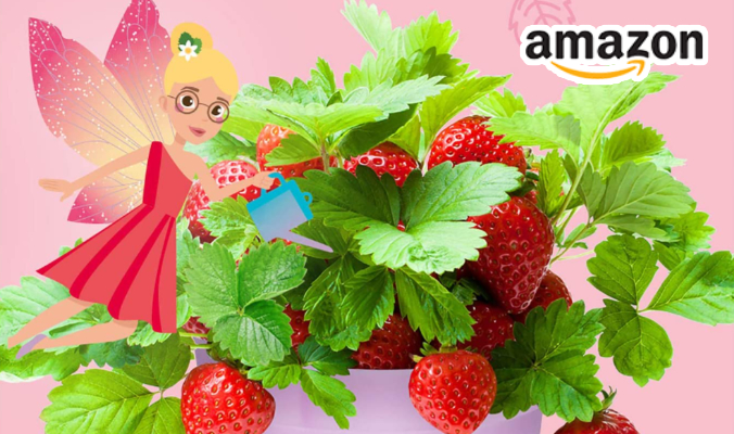 Erdbeeren Ansuchtset