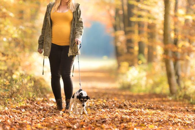 Schwangere Frau spaziert mit Hund durch Wald