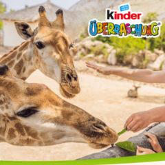 Zoo Ticket gewinnen