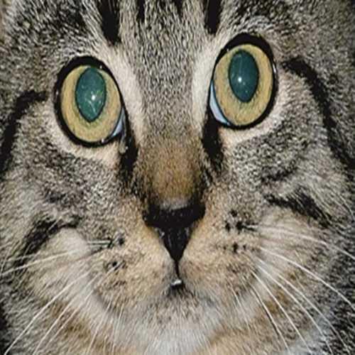 Profilbild von Tigerlilly
